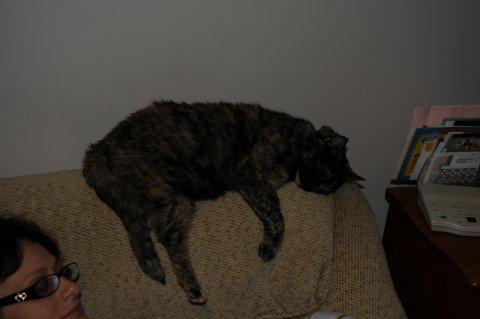 Ginger sleeping